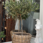 Talveta kasvisi lasiterassilla