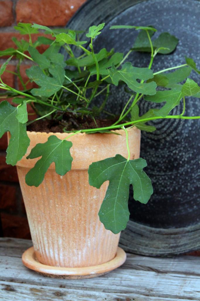 Kasvata lasiterassilla